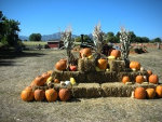 Fall decorations, straw bales, corn bundles, squash
